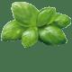Basilikum, Cashewnüsse, Pecorino Romano