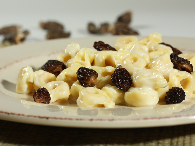 Barilla 174 Three Cheese Tortellini In Cream Sauce With Morels Parmigiano Reggiano Cheese And