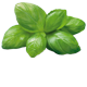 Pesto alla Genovese - ingredient